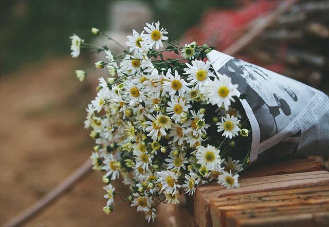 các loại hoa cúc nhỏ: cúc họa mi