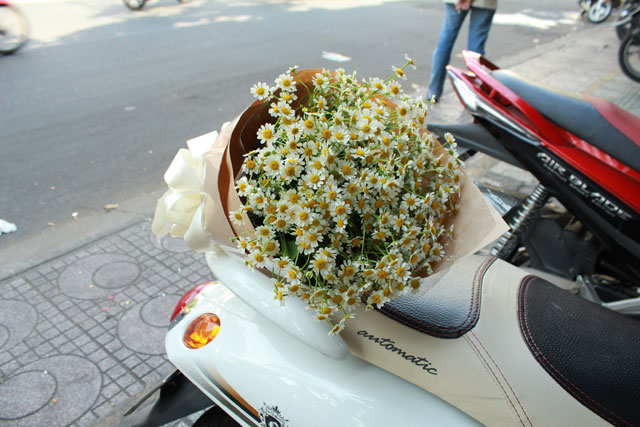 Ý nghĩa của hoa cúc tana