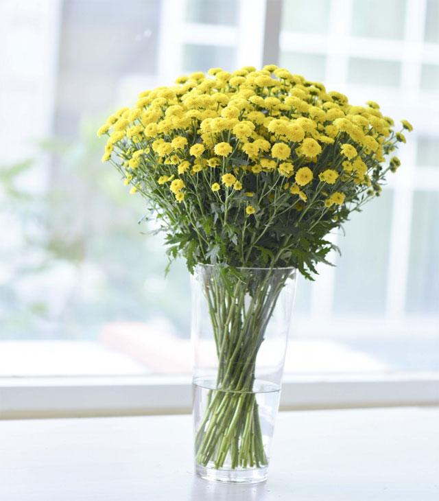 các loại hoa cúc vàng nhỏ calimero