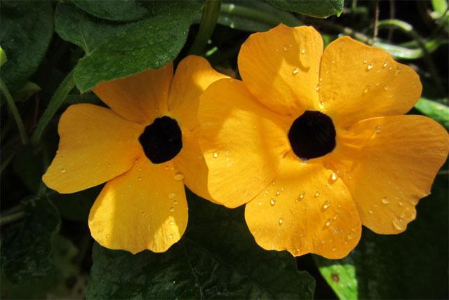 các loại hoa cúc vàng nhỏ đẹp