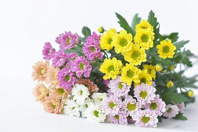 hoa tặng thầy cô giáo ngày 20/11 - hình ảnh 3