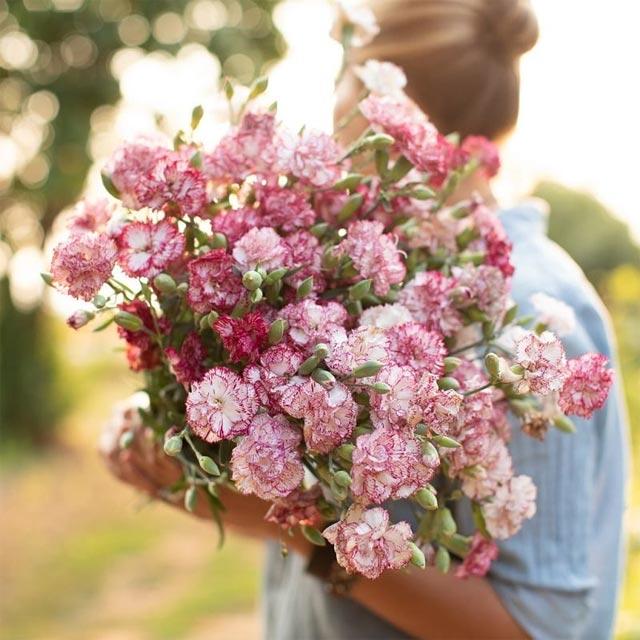hoa tặng thầy cô giáo ngày 20/11 - hình ảnh 7