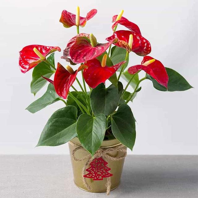 chúc mừng khai trương nên tặng hoa gì - hình ảnh 2
