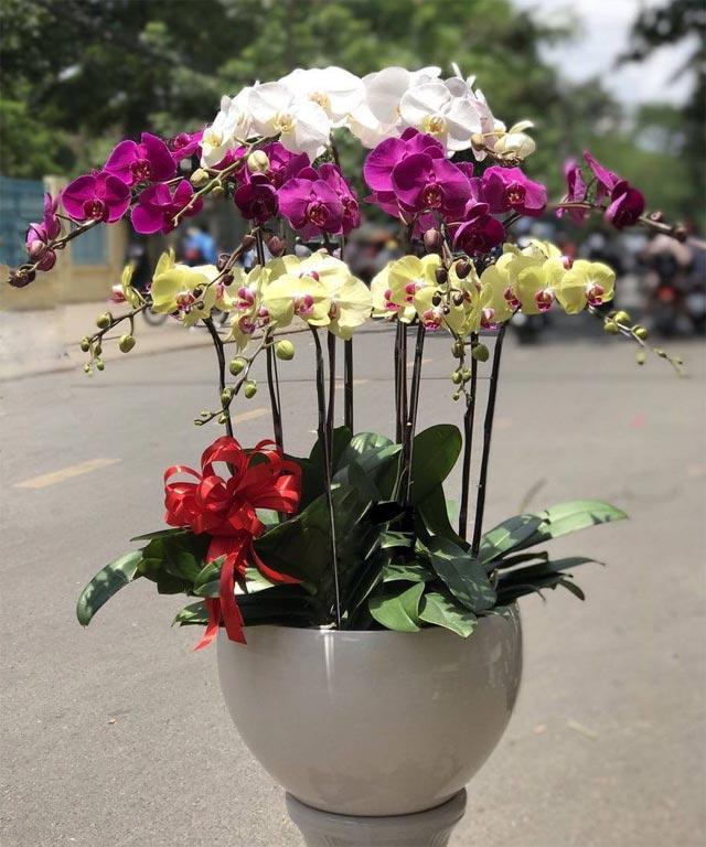 chúc mừng khai trương nên tặng hoa gì - hình ảnh 5
