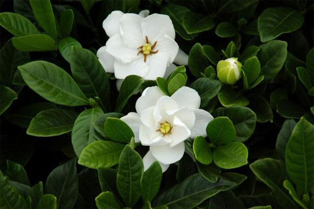 6 loài hoa tượng trưng cho sự hi vọng - hình ảnh 2