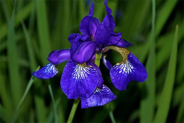 6 loài hoa tượng trưng cho sự hi vọng - hình ảnh 3