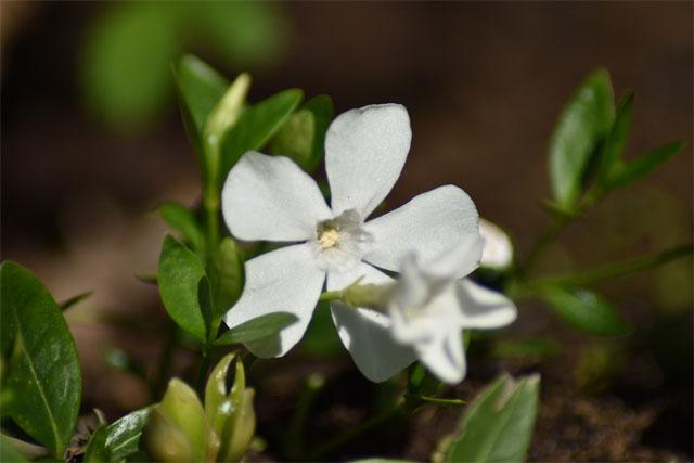 6 loài hoa tượng trưng cho tình yêu vĩnh cửu - hình ảnh 4