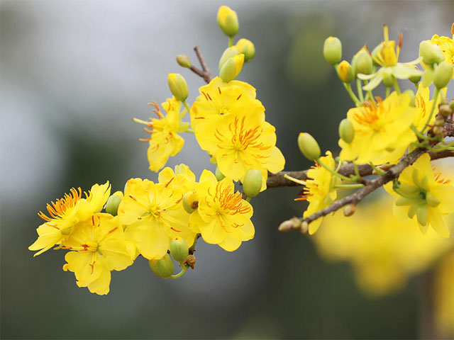 10 loại hoa chưng bàn thờ ngày Tết