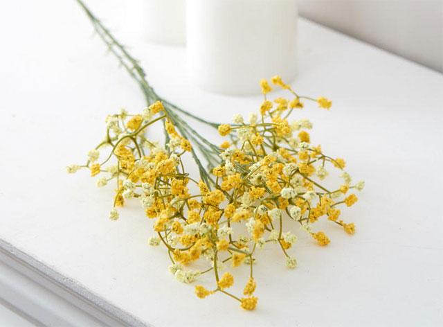 ý nghĩa hoa baby vàng